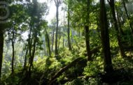 The Compensatory Afforestation Fund Act, 2016 | CAMPA, 2016